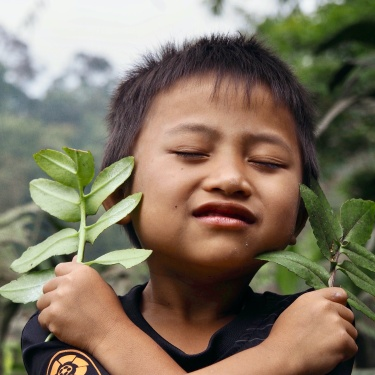 indonesia, living with the forest