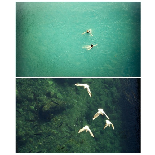 trustformation {a short story of control}  she felt like a bird swimming in the river. she didn't learn how to dive, and trust. but water taught her how to wander and transform and detach. isn't this diving too? she asked. yes, but only if you don't wonder why you wander - water said  from *tiny stories*