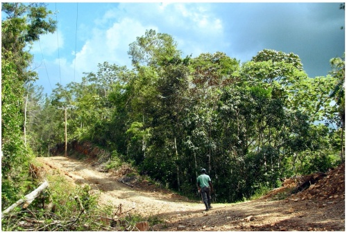 coming back from work in the field after digging canals for a micro-hydroelectric dam. dominican republic.