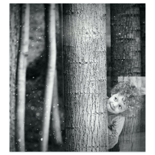 Hide and seek in the woods, collage.