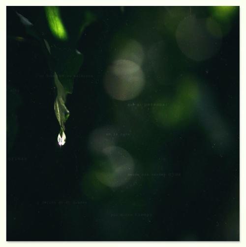 """""""Al pasar cruzo un bosque de helechos mucho más alto que mi persona: se me dejan caer en la cara sesenta lágrimas desde sus verdes ojos fríos, y detrás de mí quedan por mucho tiempo temblando sus abanicos""""   Pablo Neruda, Confieso que he vivido."""