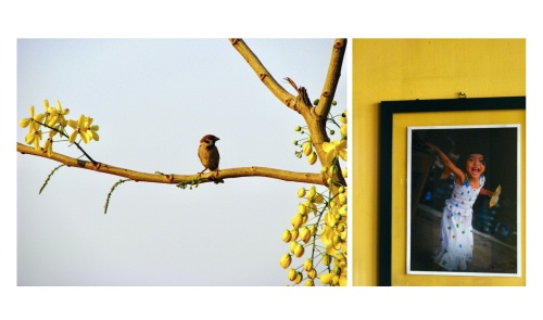 """A bird rests on a tree branch while I sip mango juice at the Foreign Correspondents' Club in Phnom Penh. When I travel for work, I always take the time to wander alone wherever I am. Back then I didn't have a smartphone, I cannot remember how I reached the FCC (hard to believe we could do so many things, when people were smarter than phones), but I wasn't there by chance. Tiziano Terzani, an Italian journalist who had such a great impact on my life, mentioned the FCC several times in his book """"Fantasmi"""". I didn't find the smell of cigarettes, nor of beer foam trapped in the moustache of foreign correspondents; not the sound of typewriters, nor the heavy steps of men climbing the creaking wooden staircase to share war news. I felt uncomfortably relaxed, sitting in a fancy bar overlooking a colourful and melancholic city that had experienced a great tragedy."""