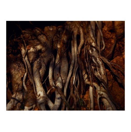 from *up to the roots*  a story I will never tell  about a wandering soul  and the intricate relation  with her roots