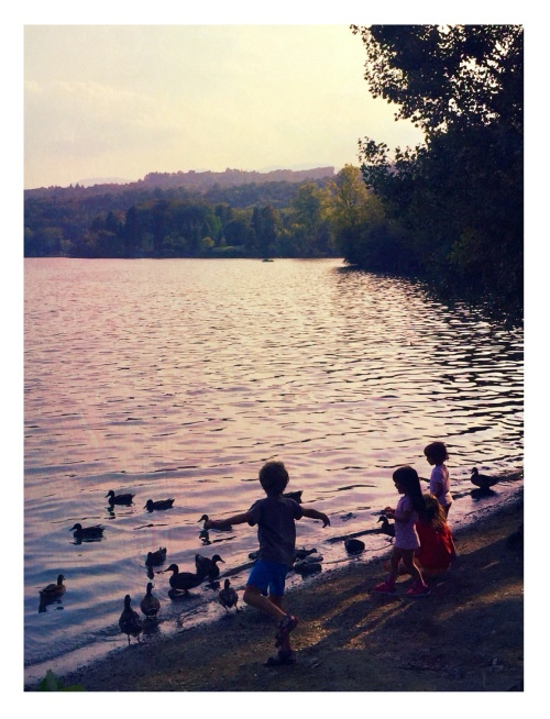 sunset at the lake • phone archive