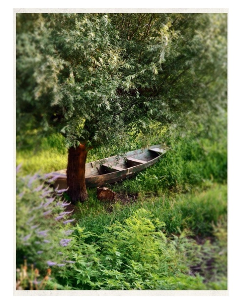 """The garden of my dreams. From the story """"Montenegro, parallel path""""."""